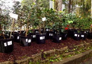 Here At Garden Gate Nursery, We Are Kinda Known For Our Camellia Selection.  And To Be Completely Honest, We Are Pretty Proud To Bring Gainesville One  Of ...