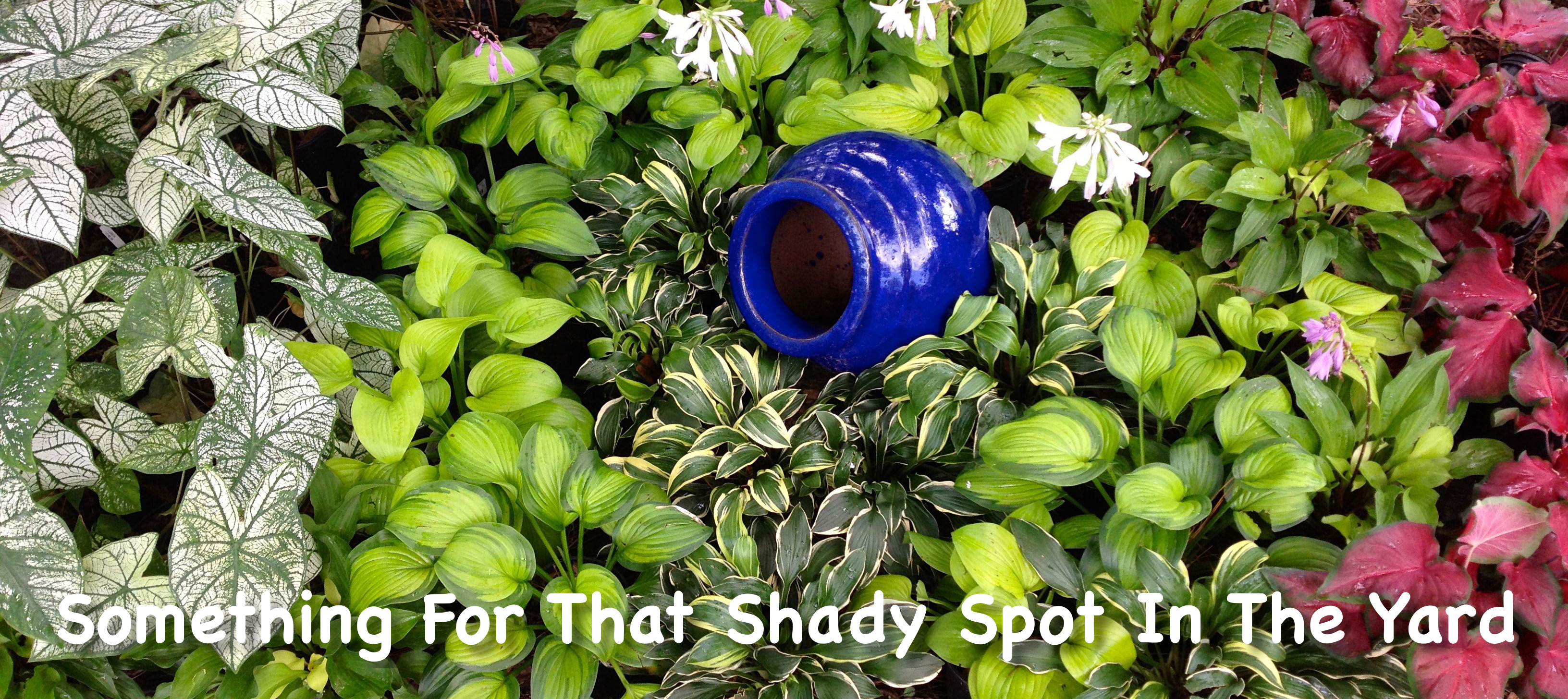 Shade Gardening In Florida