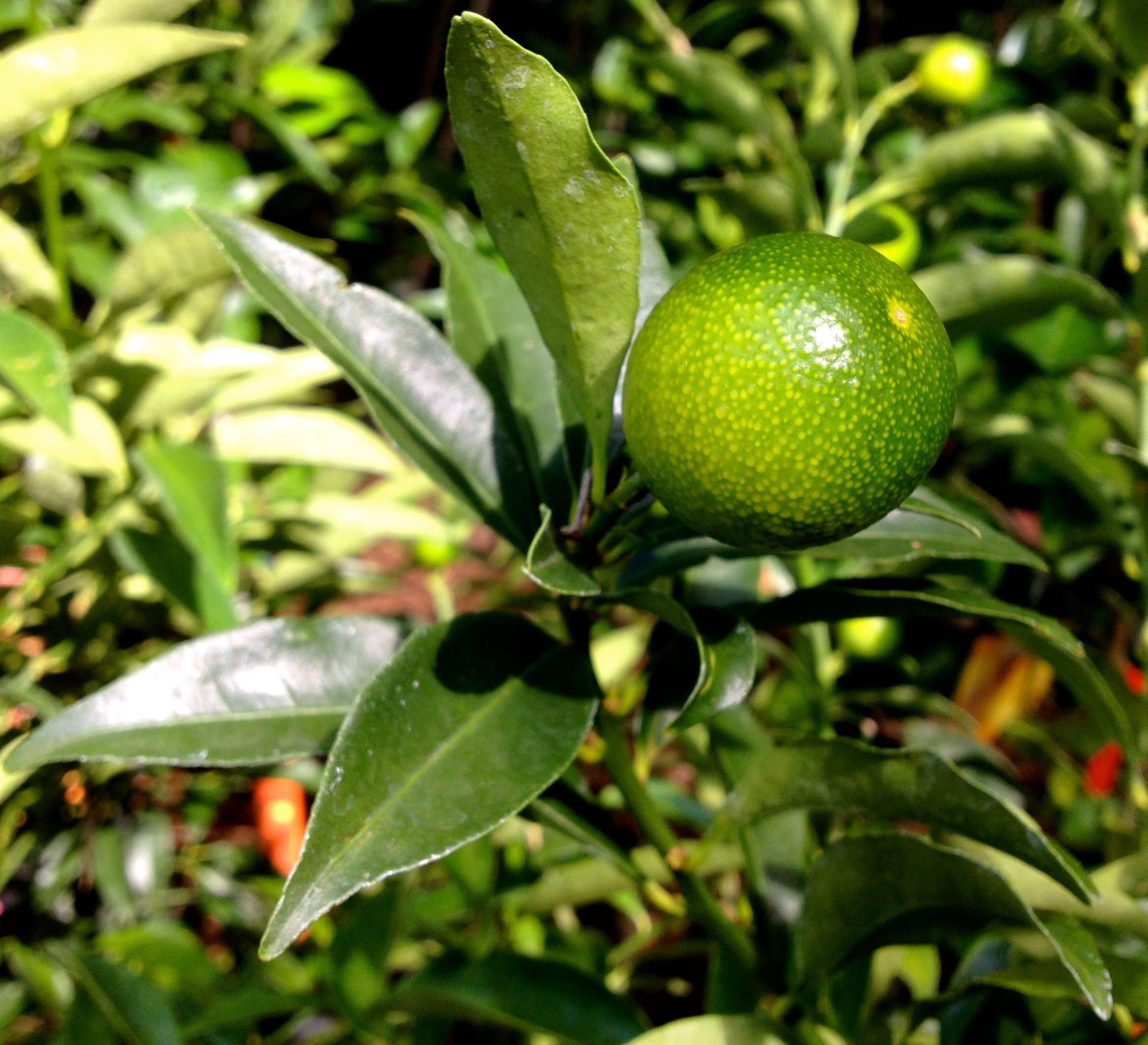 Fruit Garden Gate Nursery Gainesville Fl