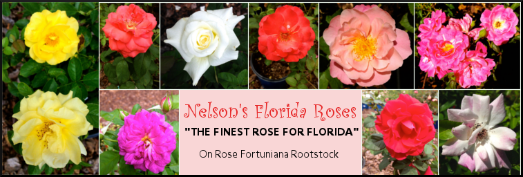 Nelsons_Florida_Roses