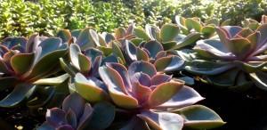 Succulents_B