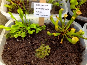 Here At Garden Gate, We Offer A Variety Of Carnivorous Plants In Single  Forms Or In Bog Gardens. In 75% To 100% Sun, Carnivorous Plants Will Thrive  In Your ...