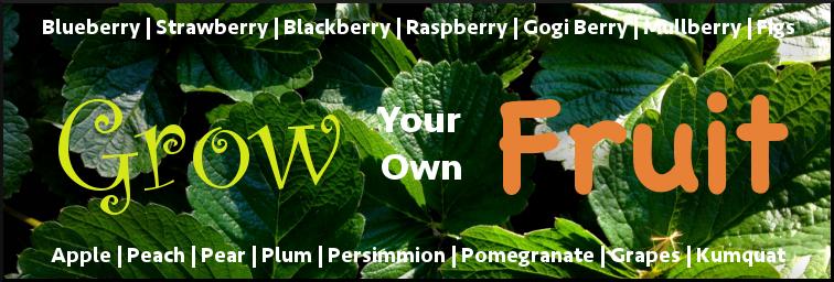 fruit_advert