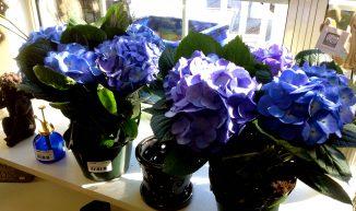 hydrangea_florist_blue