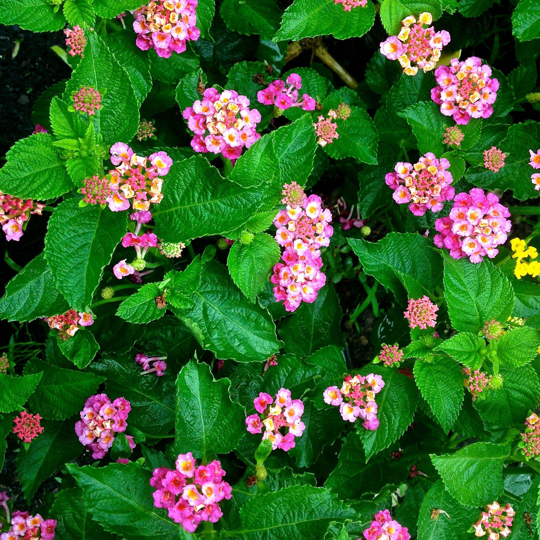 Perennials Garden Gate Nursery Gainesville Fl