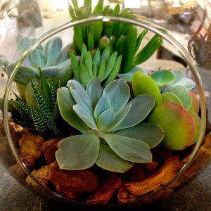 succulent_terrarium